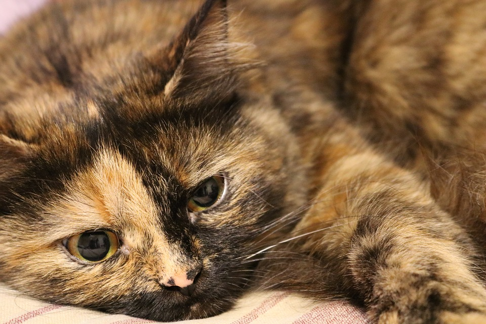 raie la pisici tratament naturist