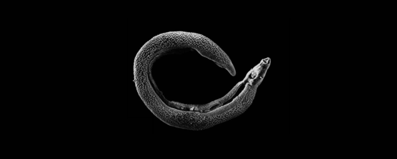Schistosomiasis funding,