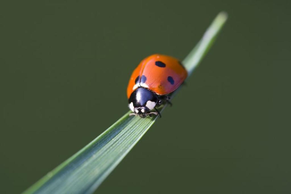 Vanzari, cumparari, donatii si alte tipuri de anunturi (Page 13) — Animale mici — Forum 4animale