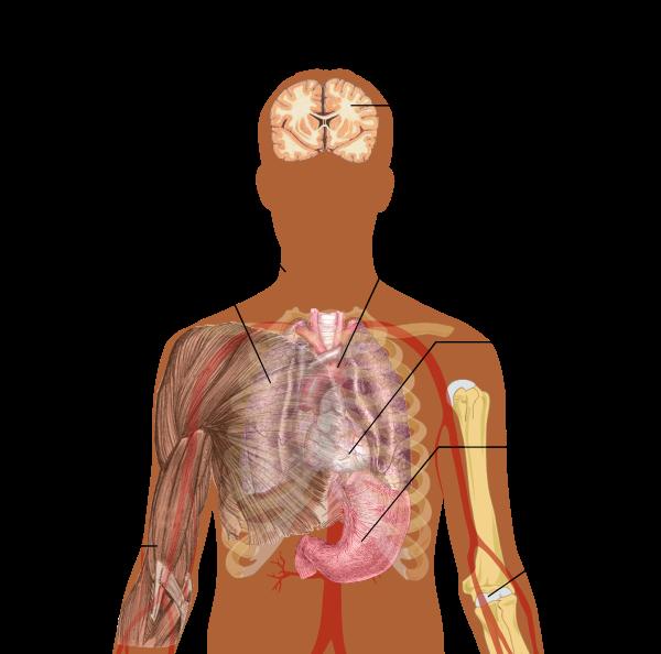 simptome infecțioase ale teniei