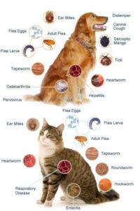 tipuri de paraziti externi