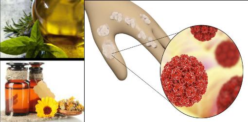 tratament cu paraziți orali viața umană rotundă de vierme