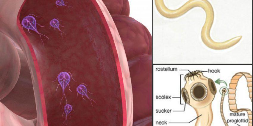 lentecul larg este un parazit