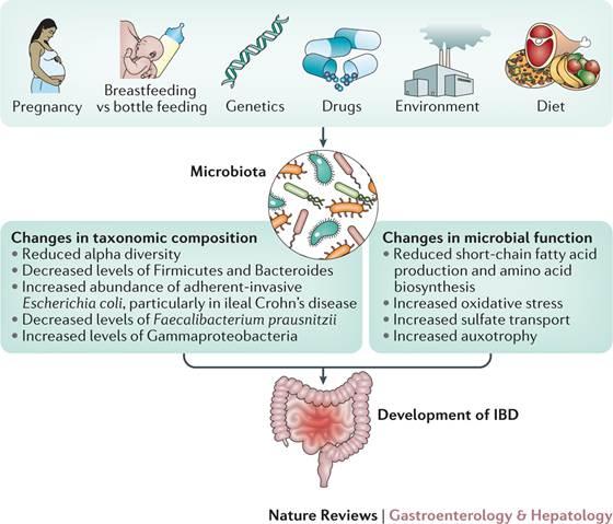 dysbiosis gastroenterologist)