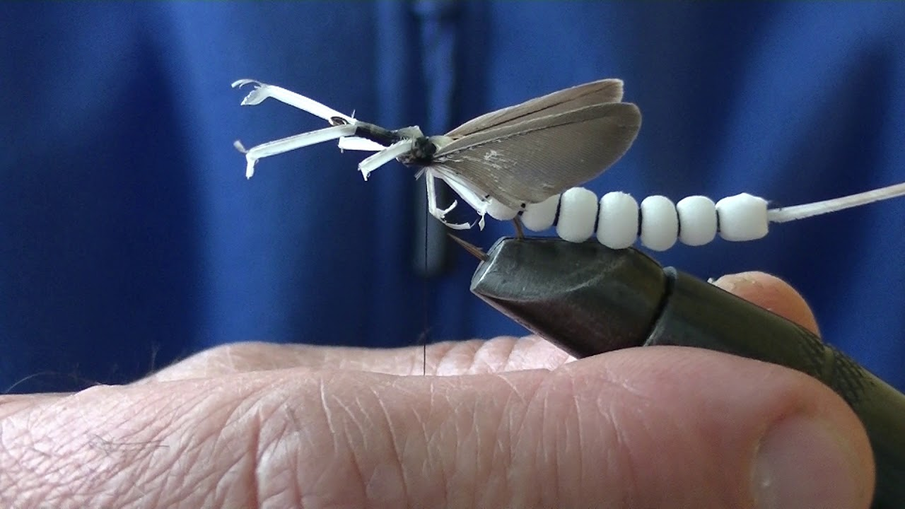 larva de rinocer