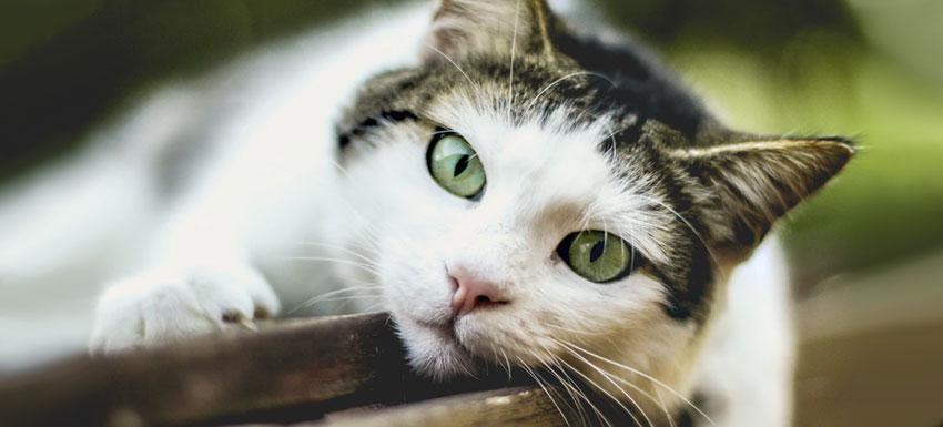 Oxiuros en gatos sintomas. Cancer bucal por brackets