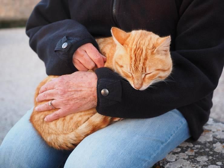 giardia gatto trasmissione uomo)