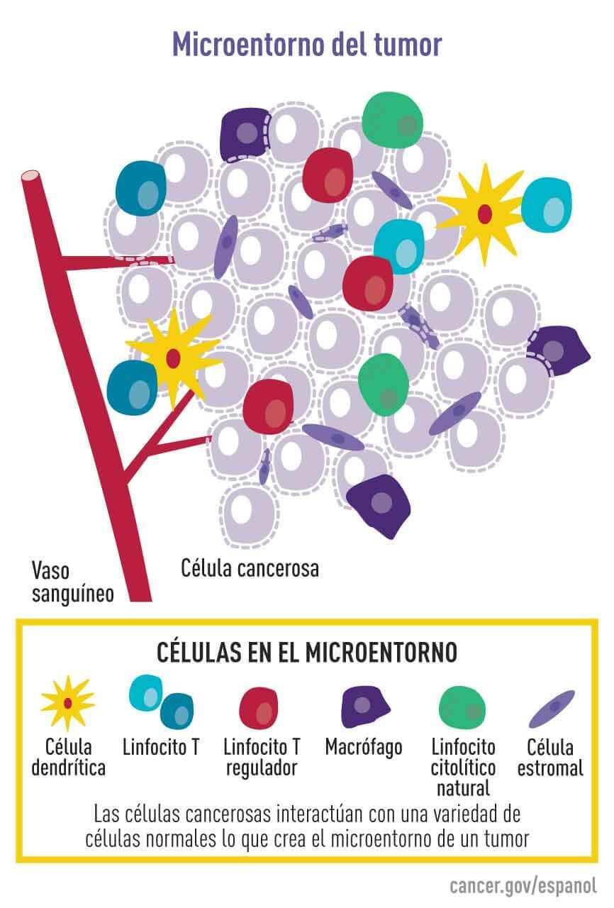 Institutul Oncologic Bucuresti - Laborator Biologia cancerului