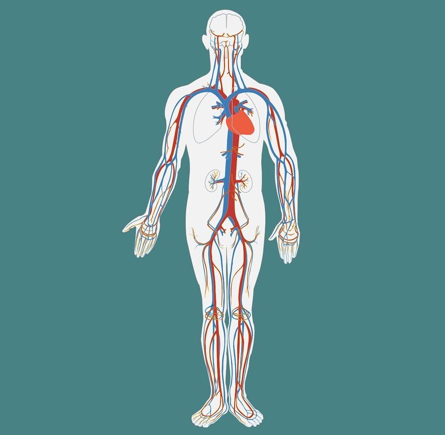 cancer limfatic celule stem
