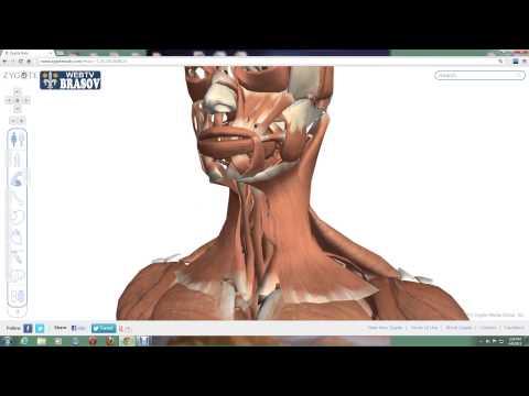nasal respiratory papillomatosis)