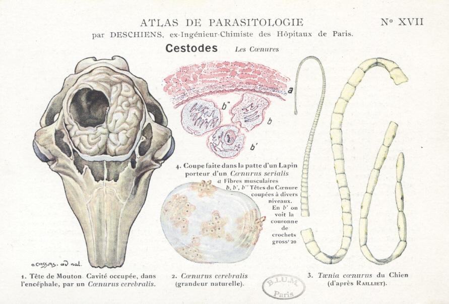 paraziți din organism)