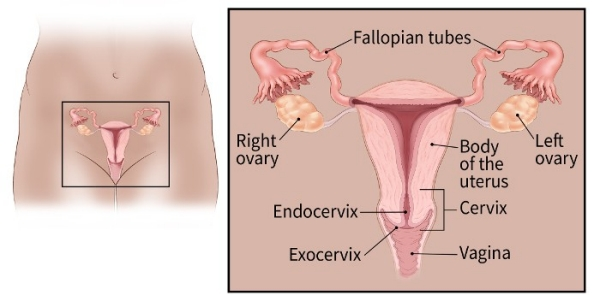 hpv womb cancer)