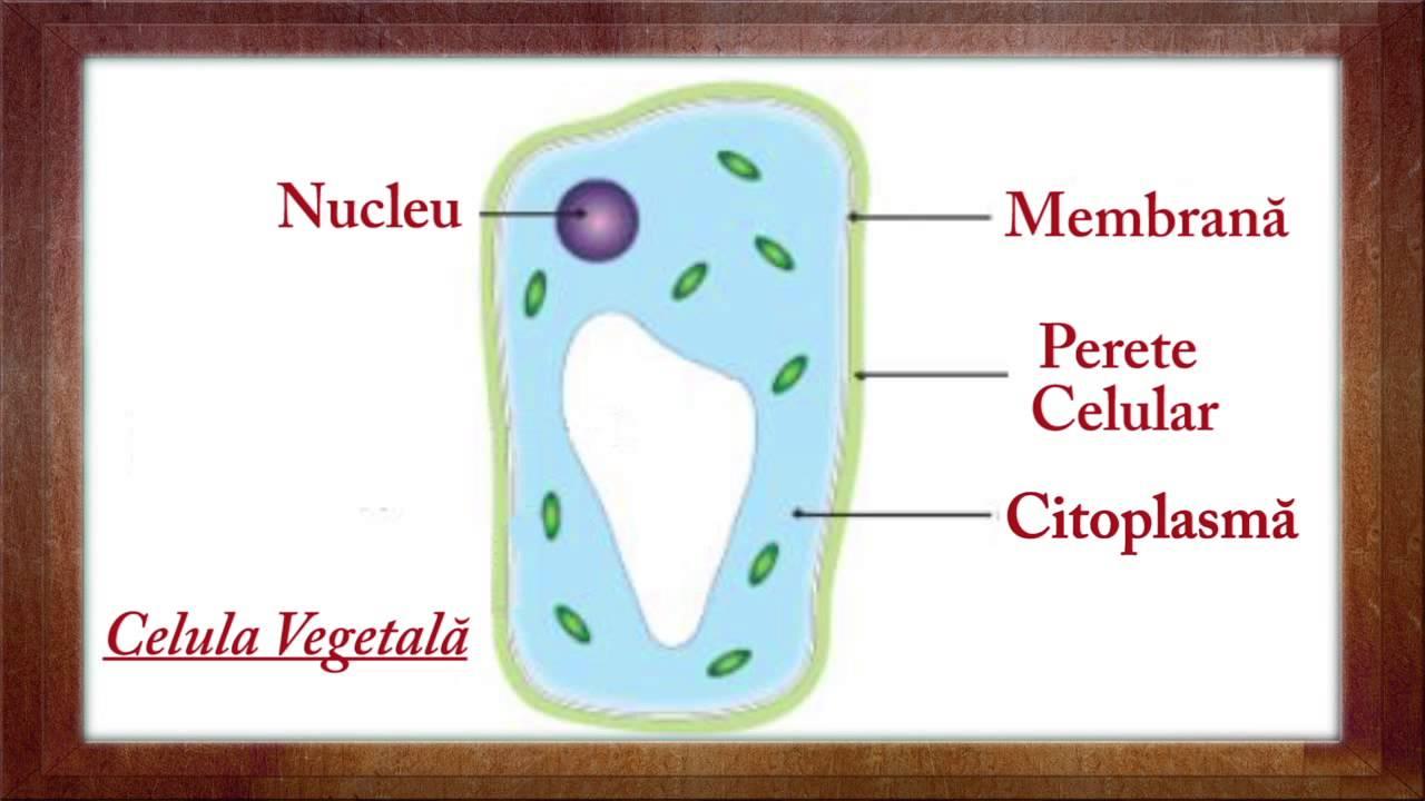 bacterii clasa 5