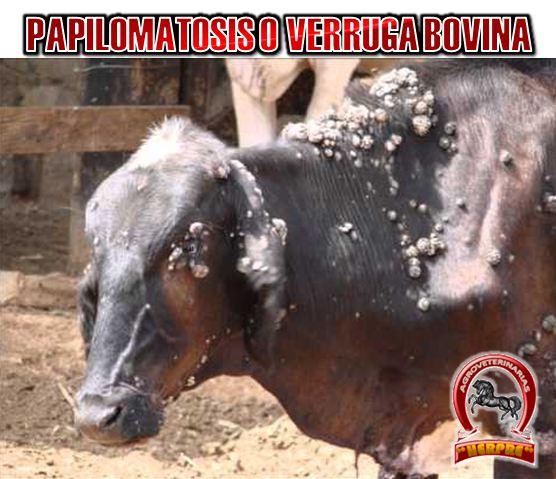 papilomatosis bovina agente etiologico)