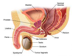 ce este condilomul uretral