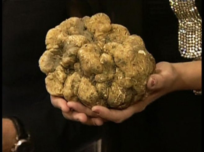 Ciuperci scumpe - Cele mai scumpe ciuperci din lume: o listă - Legume