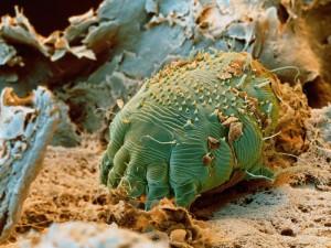 Paraziti de cocos - Cancer genetic counselor