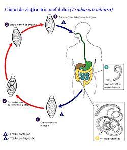 prevalența infecției cu helmint