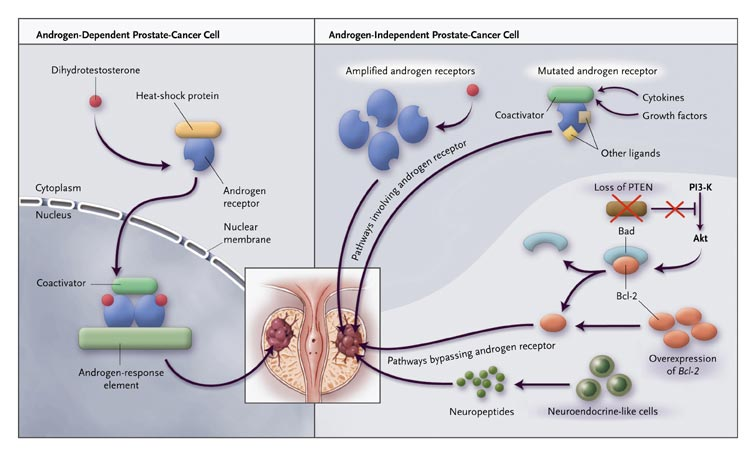 hormonal cancer treatments)
