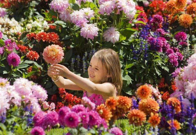 grădină de flori de tenă)
