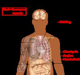 Anemia la copil: cauze, simptome si tratament   triplus.ro