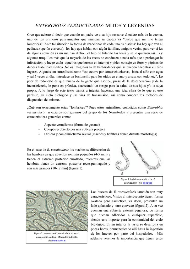 enterobius vermicularis reproduccion tratament paraziti intestinali in sarcina