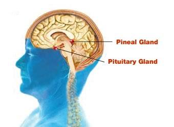 detoxifiere glanda pineala