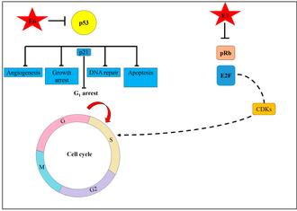 Origine papillomavirus