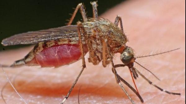 Alungă insectele din casă cu produse naturale - Doza de Sănătate