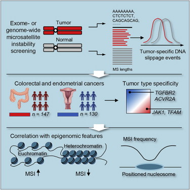 endometrial cancer msi h helminthic therapy chronic fatigue