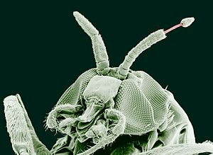 tratamentul parazitelor flukes papilloma in larynx