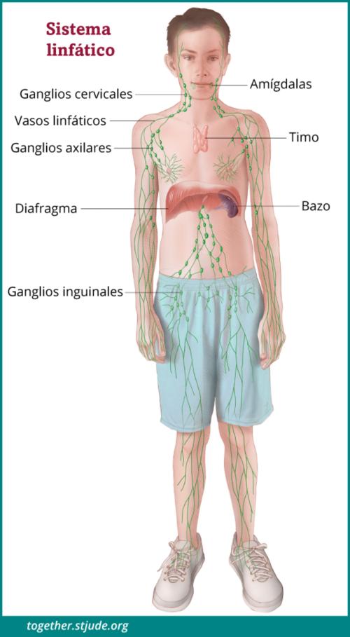 sinonasal papilloma oncocytic type