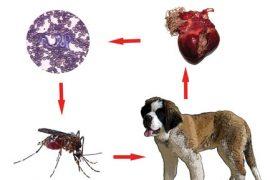 pastile pentru viermi în timpul hrănirii