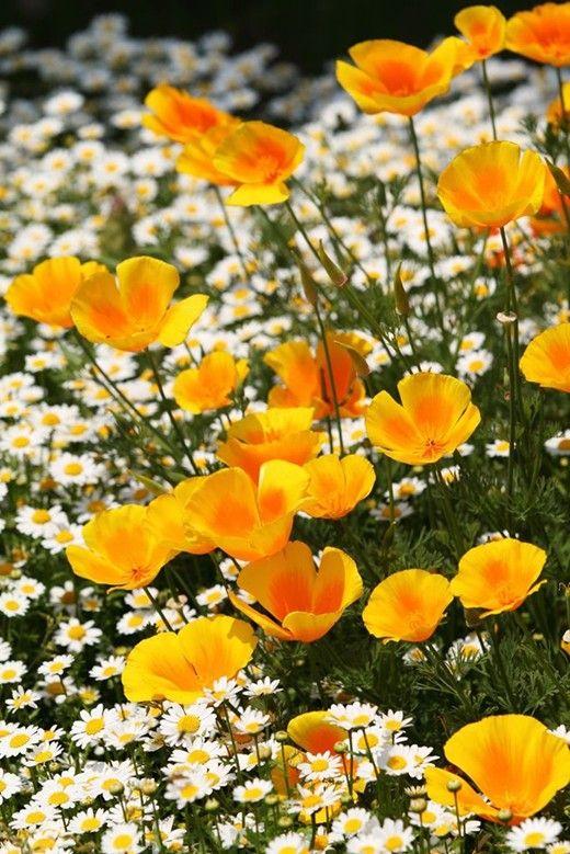 Cremă pentru mâini Floare de Lotus & Salvie