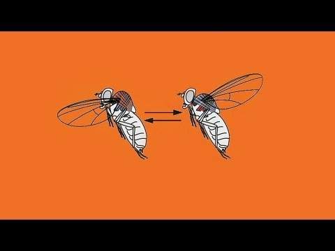 Paraziti coccidieni ppt - triplus.ro