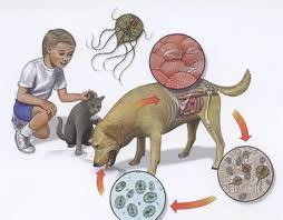 iesirea parazitului dupa tratament)