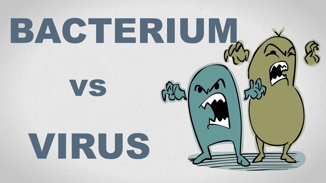 virusi vs bacterii