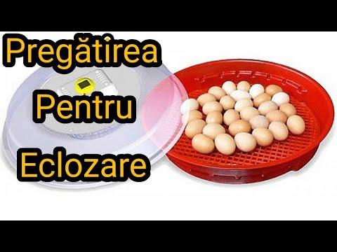 câte fecale în viermele ouălor)