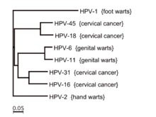 hpv strains without warts)
