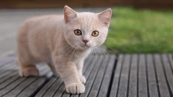 oxiuros en los gatos)