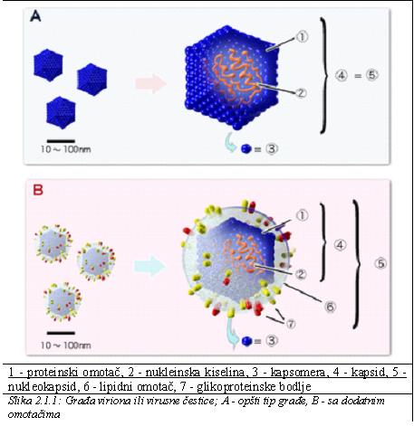 virusi 7 razred trifoi împotriva cuișoarelor