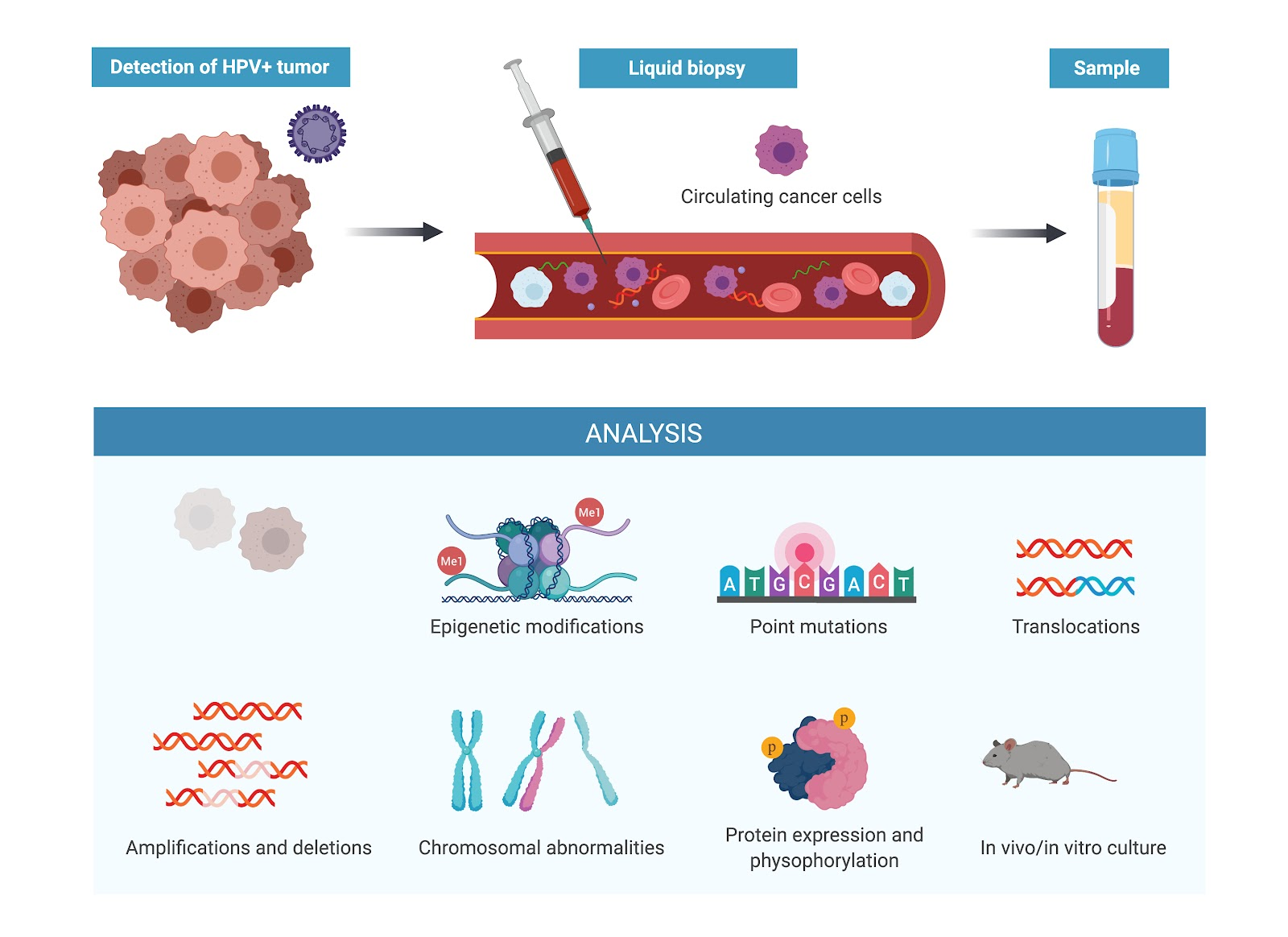 hpv and blood cancer