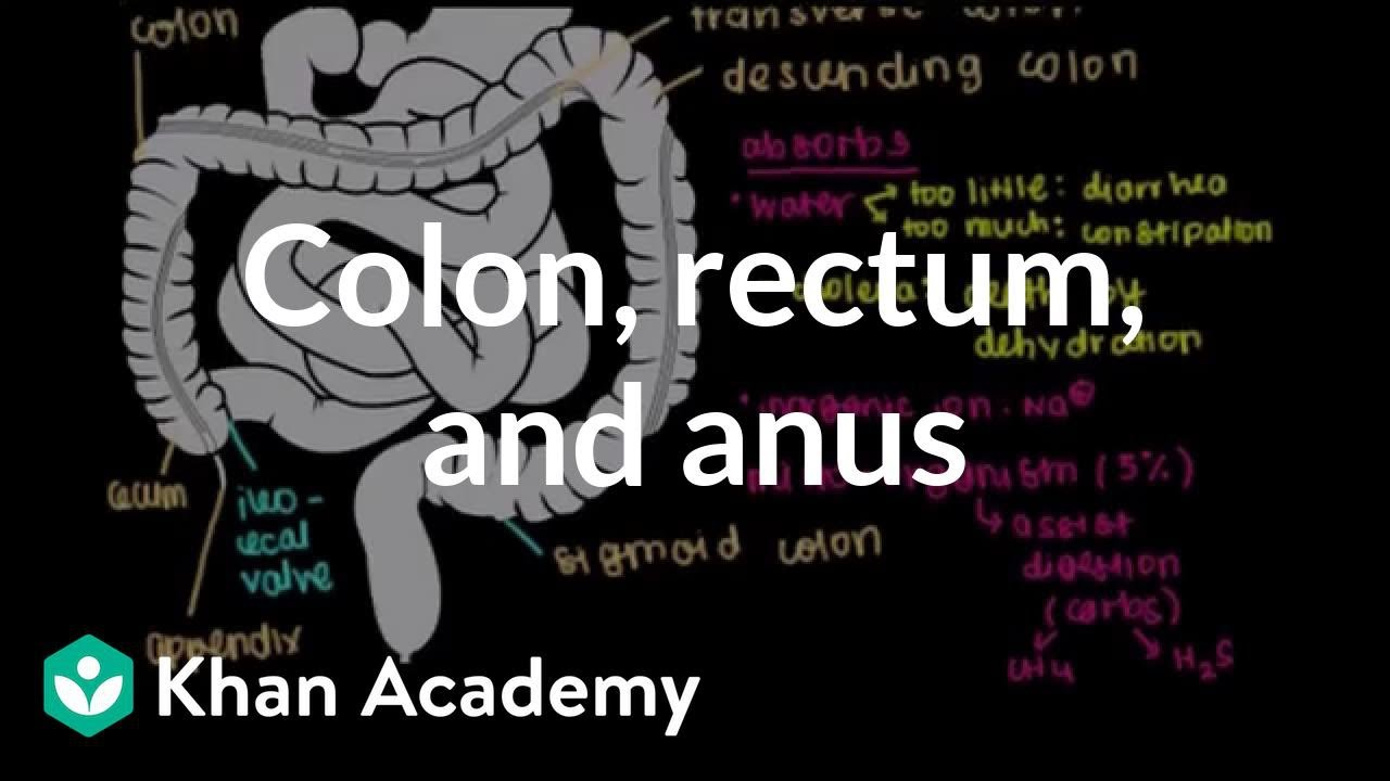 colorectal cancer khan academy