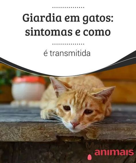 Papiloma virus em gatos