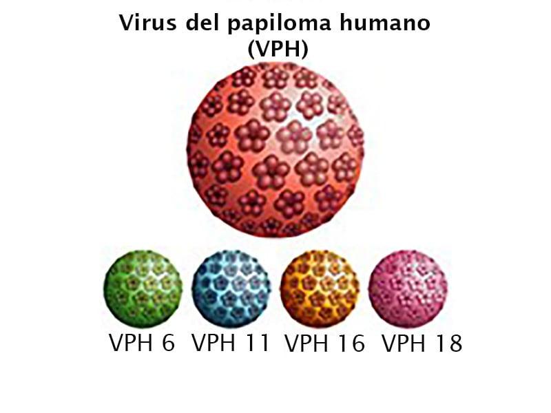 Virus papiloma humano cepas