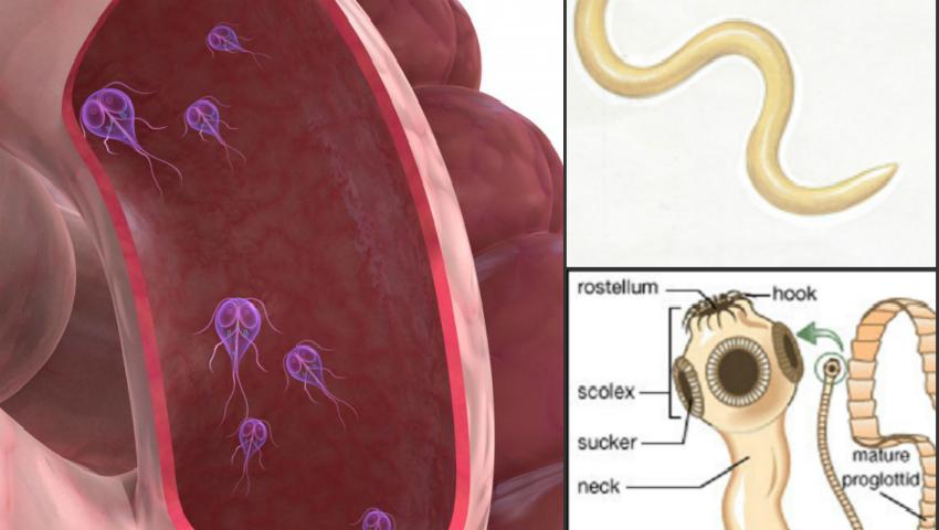 tratamentul și simptomele helminților)
