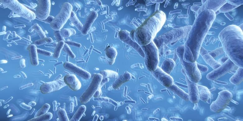 bacterii probiotice