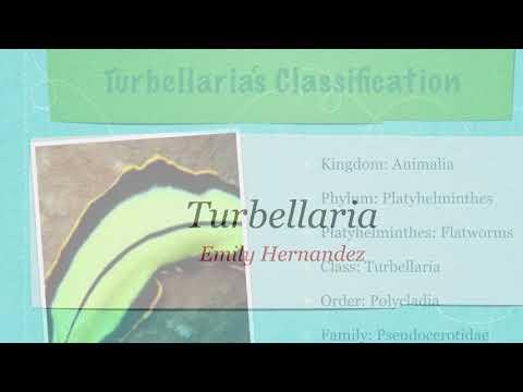 exemple de cestoda din clasa platyhelminthes papilloma dell occhio