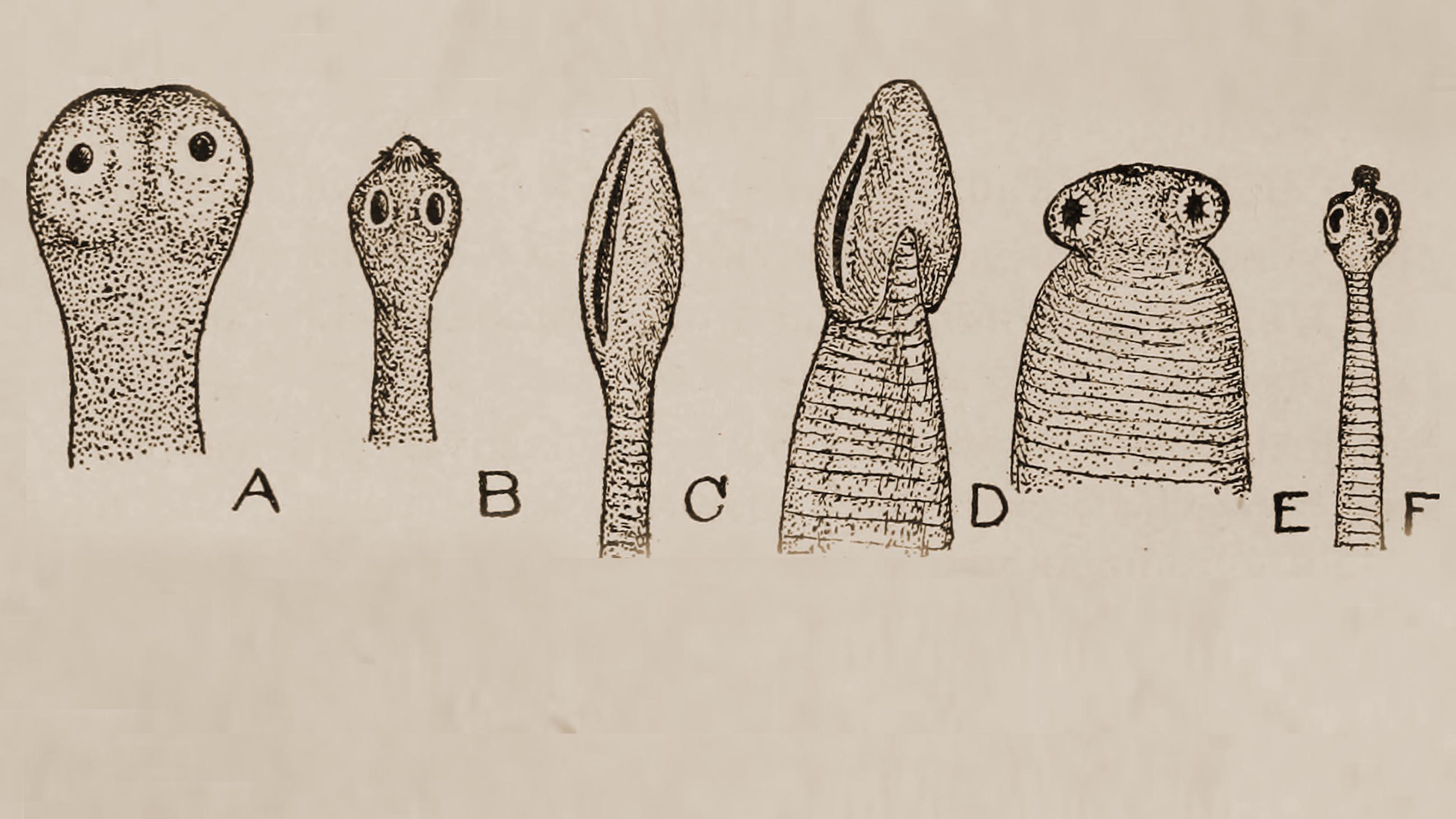 helminths vs parasitic worm)