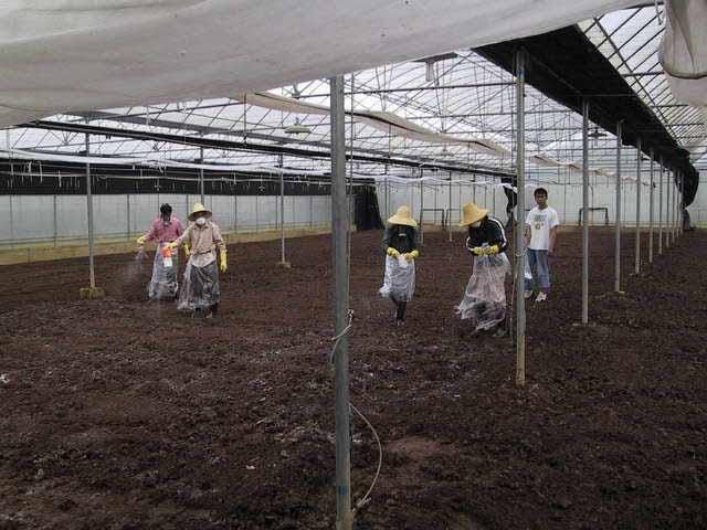viermi de dezinfectare a solului)